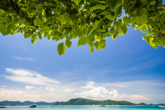 Beautiful Beach under the tree Stock Photo