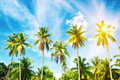 Beautiful beach. View of nice tropical beach with palms around. Royalty Free Stock Image