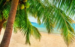 Beautiful beach. View of nice tropical beach with palms around. Royalty Free Stock Photo