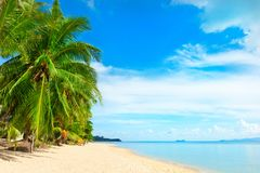Beautiful beach. View of nice tropical beach with palms around. Royalty Free Stock Images