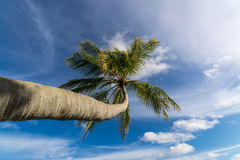 Beautiful beach. View of nice tropical beach with palms around. Stock Photo