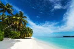 Beautiful beach. View of nice tropical beach with palms around. Stock Image