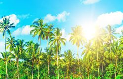 Beautiful beach. View of nice tropical beach with palms around. Holiday and vacation concept.  Tropical beach Royalty Free Stock Image
