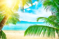 Beautiful beach. View of nice tropical beach with palms around. Holiday and vacation concept. Tropical beach. Beautiful tropical i Stock Photos