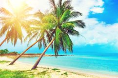 Beautiful beach. View of nice tropical beach with palms around. Holiday and vacation concept. Tropical beach. Beautiful tropical i Stock Photography