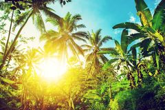 Beautiful beach. View of nice tropical beach with palms around. Holiday and vacation concept. Tropical beach. Beautiful tropical i Stock Image