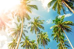Beautiful beach. View of nice tropical beach with palms around. Royalty Free Stock Photography