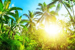 Beautiful beach. View of nice tropical beach with palms around. Holiday and vacation concept.  Tropical beach Royalty Free Stock Photo