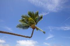 Beautiful beach. View of nice tropical beach with palms around. stock photos