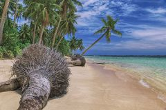Beautiful beach. View of nice tropical beach with palms around. Holiday and vacation concept. Tropical beachat stock photography