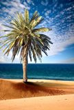 Beautiful beach view with palm tree Stock Photo