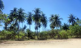 The beautiful beach of white sand , the sea and trees . Royalty Free Stock Images
