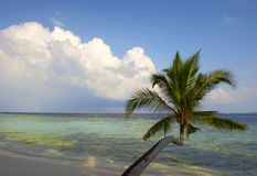 BEAUTIFUL BEACH WITH PALM TREES Royalty Free Stock Photography