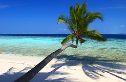 BEAUTIFUL BEACH WITH PALM TREES Royalty Free Stock Image