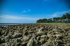 Corals at Andaman stock photography