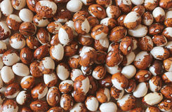 Beautiful beans. Brown and white snowcap beans Royalty Free Stock Image