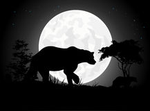 Beautiful Bear silhouettes with giant moon background Stock Photos