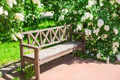 Beautiful beautiful flower lilac garden and wooden Stock Photo