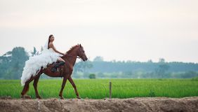Beautiful beauty bride in fashion white bridal wedding costume riding on strong muscular horse on rural countryside background royalty free stock photo