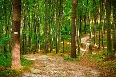 Beautiful beech forest near Rzeszow, Poland Stock Photos