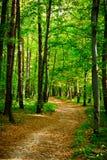 Beautiful beech forest near Rzeszow, Poland Stock Photos