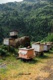Beautiful beehive in the  meadow Stock Photo