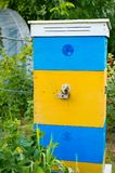 Beautiful bees hive with yellow-blue paint. Bees bring pollen to. The Beautiful bees hive with yellow-blue paint. Bees bring pollen to the hive royalty free stock photos