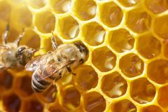 Beautiful bees on honeycombs with honey close-up Stock Photo