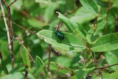Beautiful beetle stock images