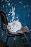 Beautiful beige kitten sitting on a chair. The cat looks down thoughtfully. Photo in the street. Blue background Stock Photos