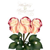3)Beautiful beige with pink roses for wedding  design. Cute wedding background with roses  and place for text Royalty Free Stock Images