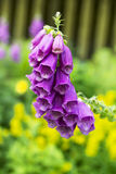 Beautiful bells that serve as a shelter for insects in the cold Royalty Free Stock Photos