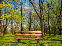 Beautiful bench next to the forest Royalty Free Stock Image