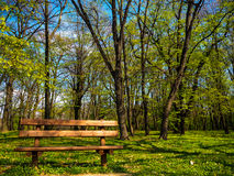 Beautiful bench next to the forest Stock Image