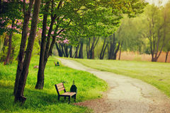 Beautiful bench in the park Royalty Free Stock Photo