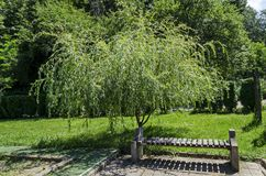 A beautiful bench under the shadow of a fresh weeping willow  in the  monastery place for relax, mountain Balkan, near Varshets to. Wn, Bulgaria, Europe royalty free stock image