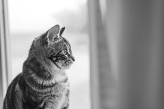 Beautiful bengal cat kitten in window Stock Photography