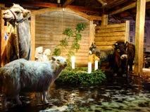 Beautiful Bethlehem in Vilnius CIty Royalty Free Stock Photography