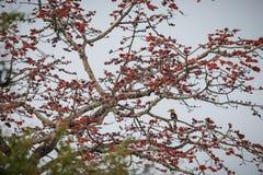 Beautiful big bird hornbill on a tree in Kaziranga, India stock photo