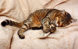 Beautiful big cat slept with mousetrap and a toy mouse Royalty Free Stock Image