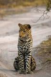 Beautiful Big Cat up close Royalty Free Stock Photography