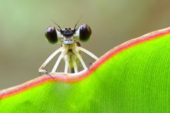 Beautiful Big Eyes Stock Photo