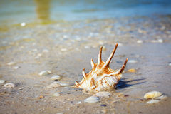 Beautiful big seashell lying on sand Stock Photography