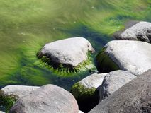 Big stones and green moss in water, Lithuania Royalty Free Stock Photo