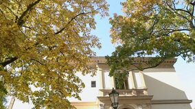 Beautiful big tree with autumn yellow leaves in front of the old villa, tree with yellow leaves on the background of an. Old building and a street lamp, Autumn stock footage