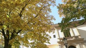 Beautiful big tree with autumn yellow leaves in front of the old villa, tree with yellow leaves on the background of an. Old building and a street lamp, Autumn stock video footage