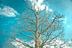 Beautiful big tree Royalty Free Stock Image