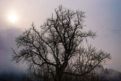 Beautiful big tree silhouette in contrast sun light Stock Images