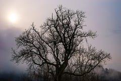 Beautiful big tree silhouette in contrast sun light Stock Images