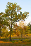 Beautiful big tree stands in the forest. Beside the road on the sunny autumn day stock photos